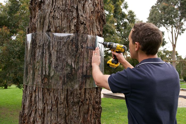 Secure the strip in place with screws - it can be re-positioned as the tree grows!